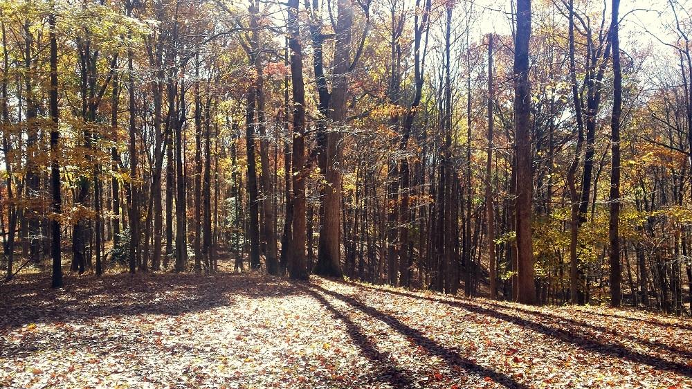 Derwood - Montgomery County, Maryland